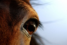 Gunna take these of my horse(: