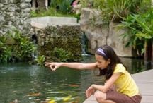 Pond Articles from Pet Care Corner