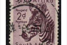 Insolite Afrique du Sud / 0