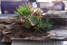 Plants & Garden:- Succulents & Cacti (ideas & info)