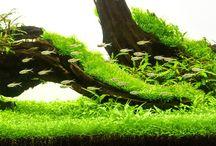 aquascape natur