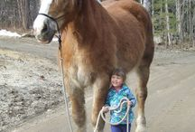 Giant horses / My big gentle giant