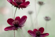 kwiaty/flowers