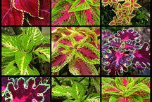 plants ~~