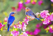 Άνοιξη- Spring