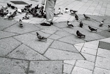 Feed the Birds / Early each day to the steps of St Paul's
