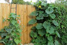 Garden/Haven