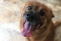 Aldo / My dog