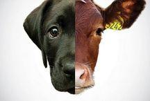 umwelt vegan