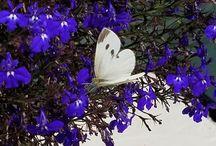 Butterflies at Greenville Inn