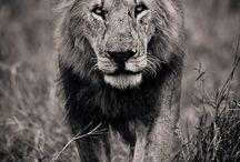 Animal Kingdom***