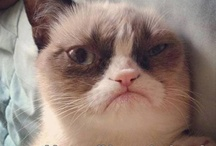 Fun stuff / Grumpy cat