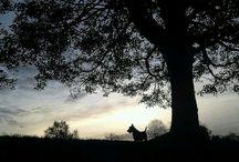 Scottish Terrier LOVE