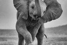 Afrique : Safari