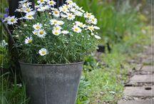 inspiracje ogród rustykalny