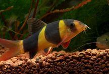 akvarijni rybky