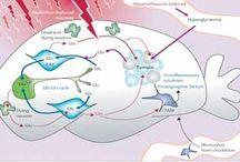 Ketogenic Diet for Cancer
