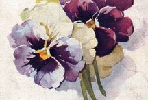 Catharine Klein artist (1861-1929) / acquerelli