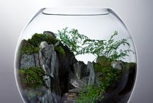 in glass landscapes