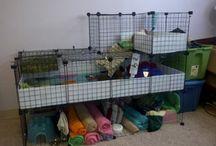Casas para bunnies