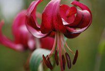 flores, natureza  amo demais / by Marelisa Almeida