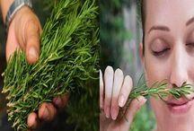 Belleza y salud / Recetas