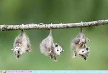 Cute!!! / by Sara Plowe
