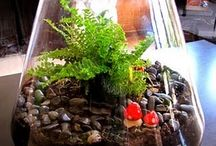 Terrariums and Airplants