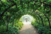 arches for garden