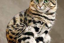 Refs - Cats