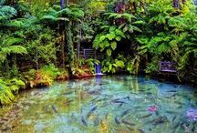 places I want to visit / new zealand