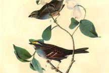 #pájaros / Imágenes de #dibujos sobre #aves #pájaros #ilustraciones / #Drawings about #birds #artworks #birdlovers