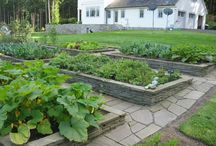 Vegetable Garden / vegetable garden tools, gadgets and ideas