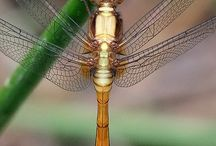 Dragonfly Moments