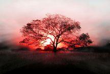 Photographie / La beauté de la nature