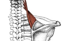 Spinal Works