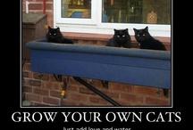 Cats-  meow meow meow!