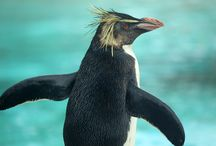 Ricky the rockhopper / Follow the movements of our rockhopper Ricky as he enjoys like at Penguin Beach.