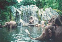 elephants! / by Erika Ickes