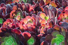 Huntington Gardens / Garden / by Bernadine Tembreull