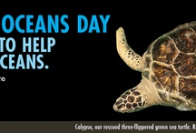 World Oceans Day! / by National Aquarium