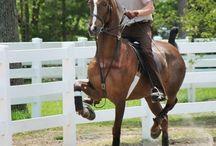 Saddleseat! / by Haylee Stevenson