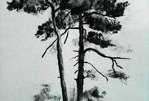 CHARCOAL DRAWING TREE