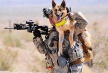 War Dogs ! / Dogs who have served / by Fashion Blogger