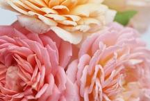 Blush, Pale Pink, Light Coral, Rose Gold Wedding Inspiration Ideas