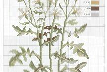 Botaniczne rośliny krzyżykowe