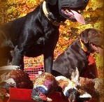 Pet Stuff & Vet Clinics / by Katie Hennessy