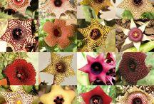 Flores diferente