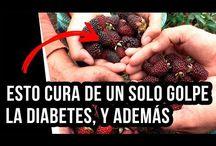 Infusiones Para Diabéticos
