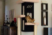 Gato Casinhas